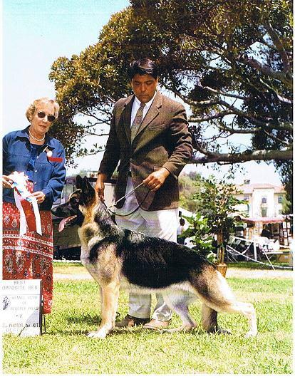 Forest City Dog Training Club Agility Trial